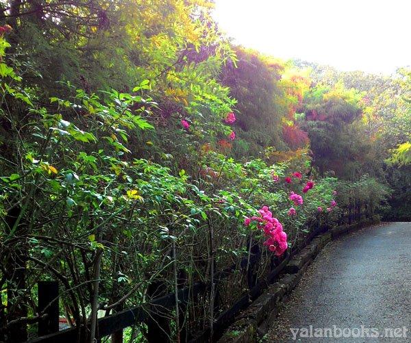 Life Travel Taiwan CingJing Provence Rose Lodge Romanticism Photography 旅行 台湾 南投清境 普罗旺斯玫瑰庄园 风光摄影 浪漫主义 Yalan雅岚 黑摄会