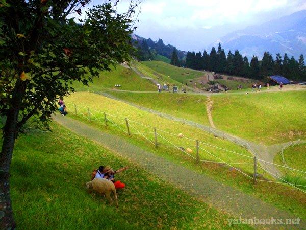 Life Travel Taiwan CingJing Sheep Farm Romanticism Photography 旅行 台湾 南投 清境农场 草原 风光摄影 浪漫主义 Yalan雅岚 黑摄会